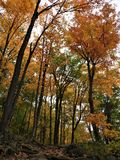 Fall Foliage Line Rocky Hiking Trail royalty free stock images