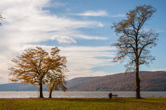 Fall foliage lone tree at river front Stock Image