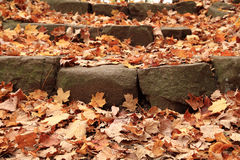 Fall foliage and maple leaves scattered on stone steps Royalty Free Stock Photography