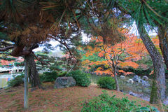 Fall foliage at Maruyama Park Stock Photo