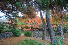 Fall foliage at Maruyama Park Royalty Free Stock Photo