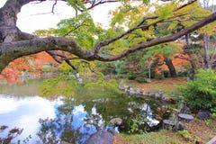 Fall foliage at Maruyama Park Royalty Free Stock Photography