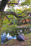 Fall foliage at Maruyama Park Stock Photos
