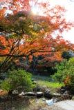 Fall foliage at Maruyama Park Stock Image