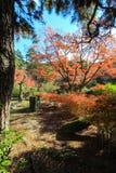 Fall foliage at Maruyama Park Royalty Free Stock Image