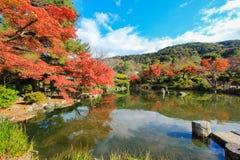 Fall foliage at Maruyama Park Royalty Free Stock Photos