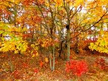 Fall foliage, Massachusetts, USA. Fall foliage in rural Massachusetts, USA on sunny day Royalty Free Stock Images