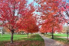 Fall foliage at Miller Park Royalty Free Stock Photos
