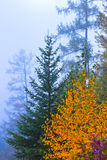 Fall foliage, misty autumn forest Royalty Free Stock Images