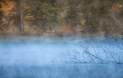 Fall foliage and misty pond. In North Carolina Stock Photos