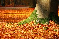 Fall Foliage, Moss, Tree, Autumn Royalty Free Stock Photography