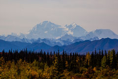 Fall foliage with mountain in background,Alaska Royalty Free Stock Photos