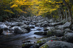 Fall foliage and mountain stream, Great Smoky Mountains stock image