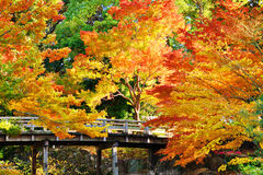 Fall Foliage in Nagoya, Japan Royalty Free Stock Photography