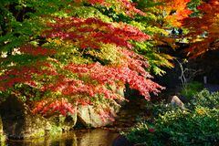 Fall Foliage in Nagoya, Japan Royalty Free Stock Photos
