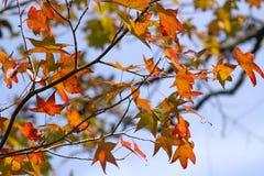 Fall Foliage at the Nature Preserve
