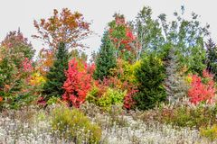 Fall Foliage. New England Royalty Free Stock Photo