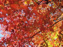 Fall Foliage in New England stock photos