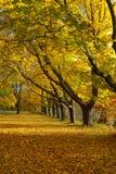 Fall Foliage in New England Seacoast Stock Photo