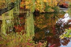 Fall foliage and colorful leaves on a pond in Connecticut. Autumn leaves reflected into a lake or pond in Greenwich, Connecticut. Foliage is orange, yellow, red Stock Image