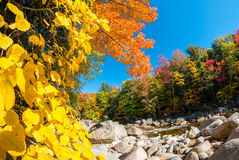 Fall foliage of New England, USA.  Stock Photos