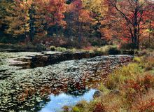 Fall Foliage, New York State Stock Images