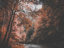 Fall foliage over river Stock Photography