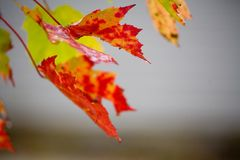 Fall Foliage in Rain royalty free stock photography
