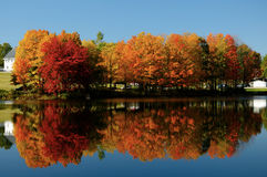 Fall foliage reflecting in lake. Colorful fall foliage on waterfront reflecting in blue waters of lake Stock Images