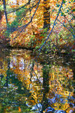 Fall foliage reflected. Fall foliage colors over a lake Royalty Free Stock Image