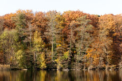 Fall Foliage Reflecting Off the Water Royalty Free Stock Image