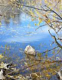 Fall foliage reflections Boise River royalty free stock image