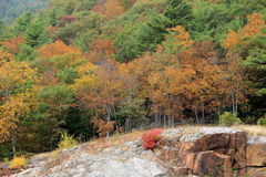 Fall foliage and rocky mountainside Stock Image