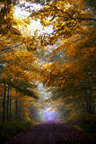 Fall Foliage Scene. Fall leaves over a dirt road, slightly fogged royalty free stock image