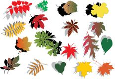 Fall foliage with shadows Royalty Free Stock Images