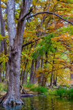 Fall Foliage Surrounding the Frio River at Garner State Park Royalty Free Stock Image