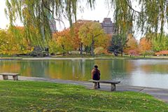 Fall foliage surrounds Wade Park Lagoon in Cleveland, Ohio, USA. A solitary man sits staring out at the fall foliage lined Wade Park Lagoon in the University stock photos