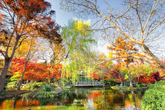 Fall Foliage in Texas Stock Photography