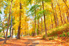 Fall Foliage royalty free stock photos