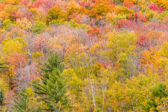 Fall Foliage tree - natural background Stock Photography