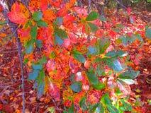 Fall foliage on tree Stock Photography
