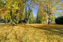 Fall foliage under the tree Stock Photos