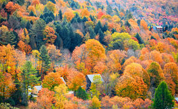 Fall foliage in Vermont royalty free stock image