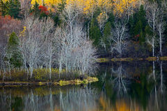 Fall Foliage Water Reflections Royalty Free Stock Photo