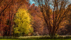 Fall foliage stock photo