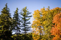 Fall foliage with yellow, green and orange colors against a blue autumn sky. Fall foliage with yellow, green and orange colors against a blue sky. Taken in stock photo