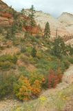 Fall Foliage, Zion Stock Images