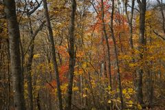Fall Folliage in North Carolina Mountains. Colorful Fall Folliage in North Carolina Mountains. Autumn trees with brightly colored leaves stock photography
