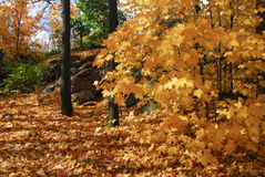 Fall folliage. In Quebec, canada royalty free stock image