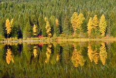 Fall folliage reflects in Trillium Lake in Oregon. On a calm day you can get some reflections in Trillium Lake here in Oregon. Autumn colors were quite a stock photo